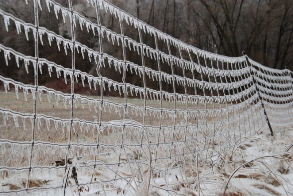 ice on fence